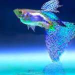 Doenças Oculares Comuns Em Peixes
