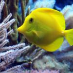 Infecção de Guelra em Peixes