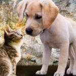 Por Que Meu Cachorro Está Comendo Areia do Gato?
