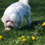 Descubra Por Que Você Deve Deixar o Seu Cão Cheirar Durante o Passeio