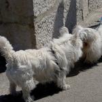 Por Que os Cachorros Cheiram Uns Aos Outros
