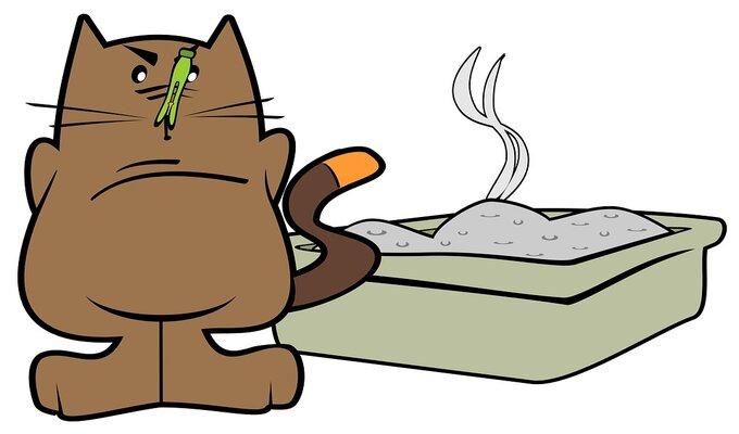 Caixa de areia do gato com cheiro forte, sintoma característico de problemas urinários.