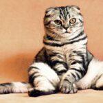 Diarreia Em Gatos: 5 Opções de Tratamento