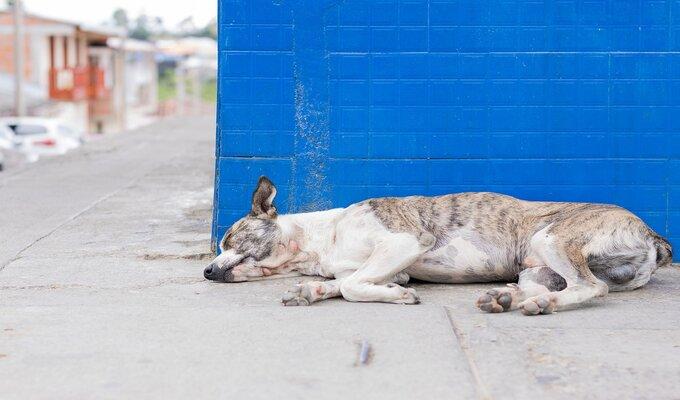 Cachorro deitado, simbolizando o cansaço causando pela diarreia em cachorros.