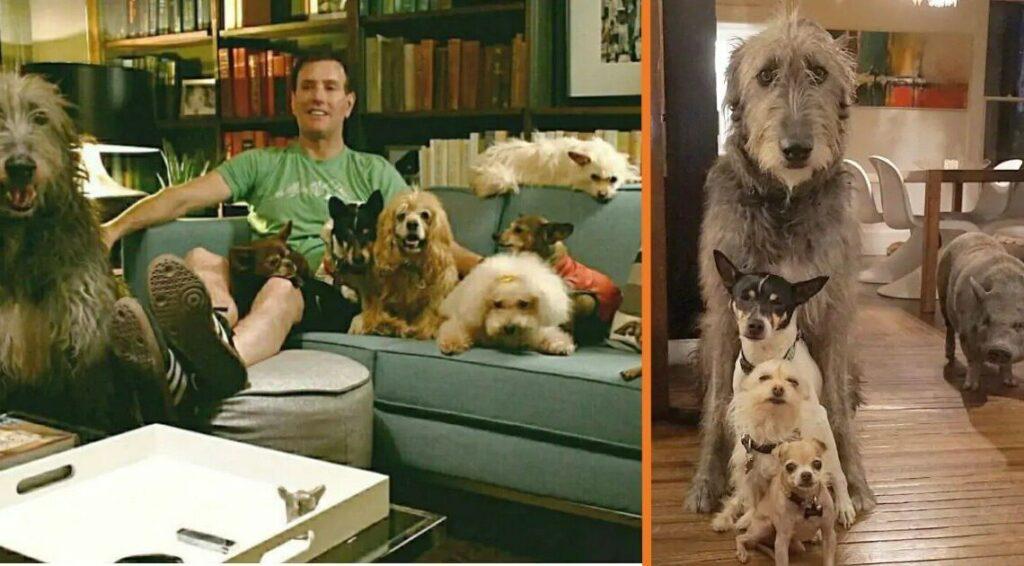 cães idosos adotados