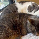 Essa Gata Heroica Entrou No Celeiro Em Chamas Para Salvar Seus Gatinhos