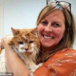 Rubble, O Gato Mais Velho Do Mundo Morre Aos 31 Anos