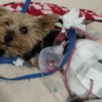 Cachorrinha Entra Na Frente De Coiote Que Iria Atacar Menino E Salva Sua Vida