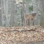 Esse Cervo Preso Com A Cabeça Em Um Vidro Estava Sem Comer E Beber Há Dias