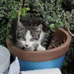Gato Sai Para A Rua E Traz Gatinho Abandonado Junto Com Ele